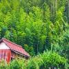 民家と竹林