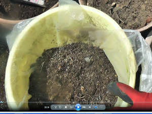 ペチュニア 鉢植え 準備するもの 生ゴミコンポスト堆肥1 (1)