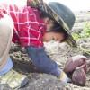 畑を掘る子供
